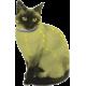 Collare naturale per gatto anti-pulci e zecche